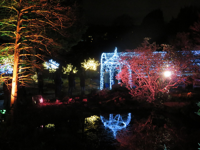 Birmingham Botanical Gardens Christmas lights