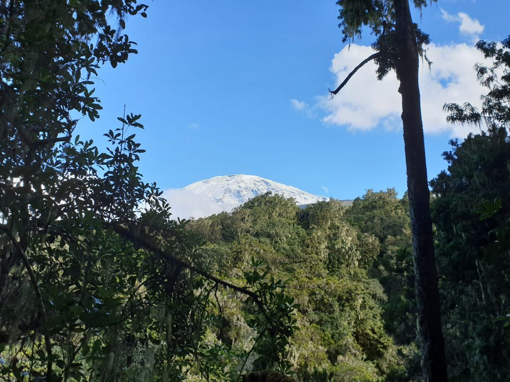 Kilimanjaro mountain, covered in snow, peaks over the jungle