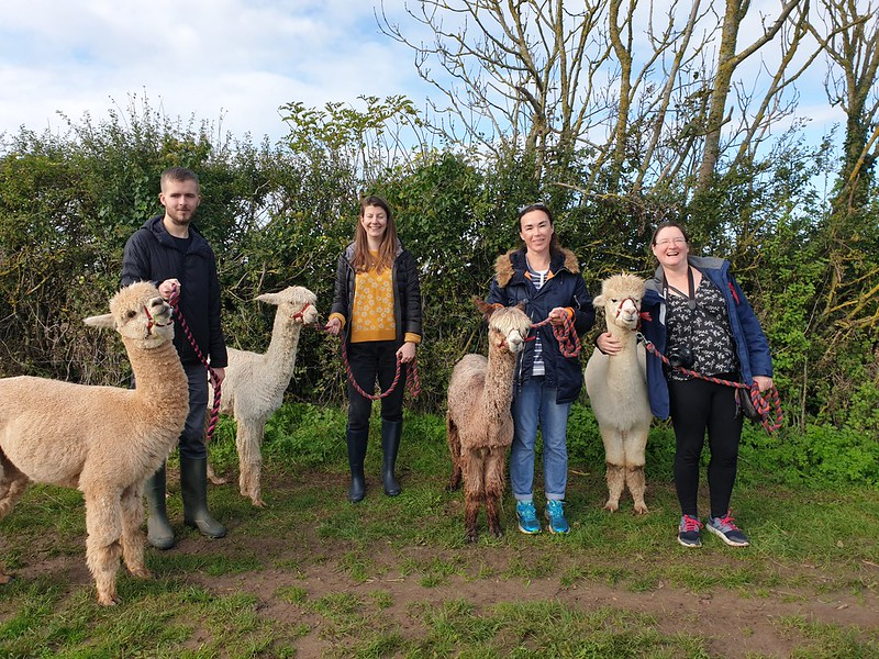 The team lined up with their alpacas